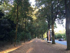 Spaziergang im Herbst, Kleinigkeiten und sich selbst neu entdecken