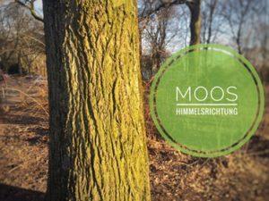 Papa wieso wächst Moos nur auf der Nordseite am Baum?